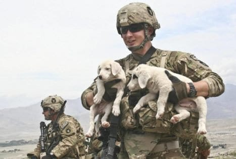 this-soldier-needed-two-puppies