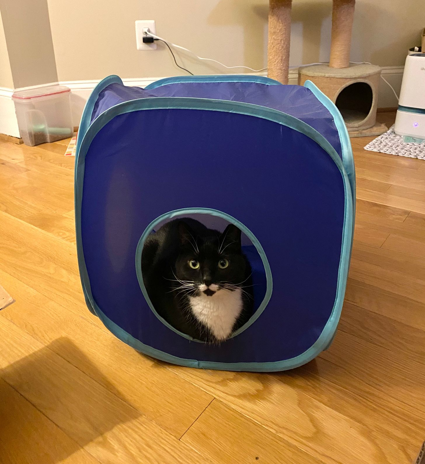 A black and white cat with a white mustache marking sits in a cube-shaped cat toy, staring at the camera.