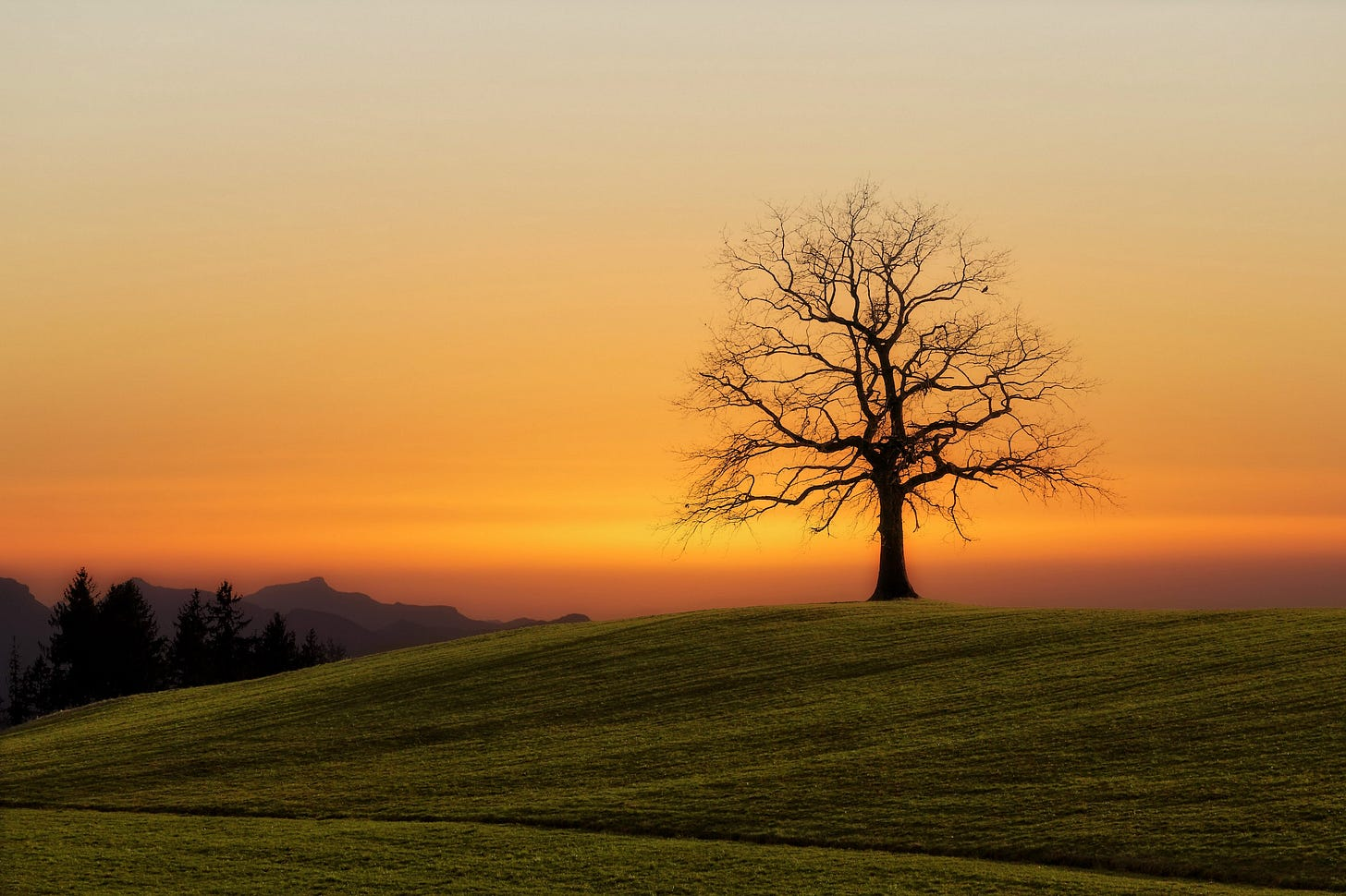 image of a tree on a hill at sunset for poem by Larry G. Maguire