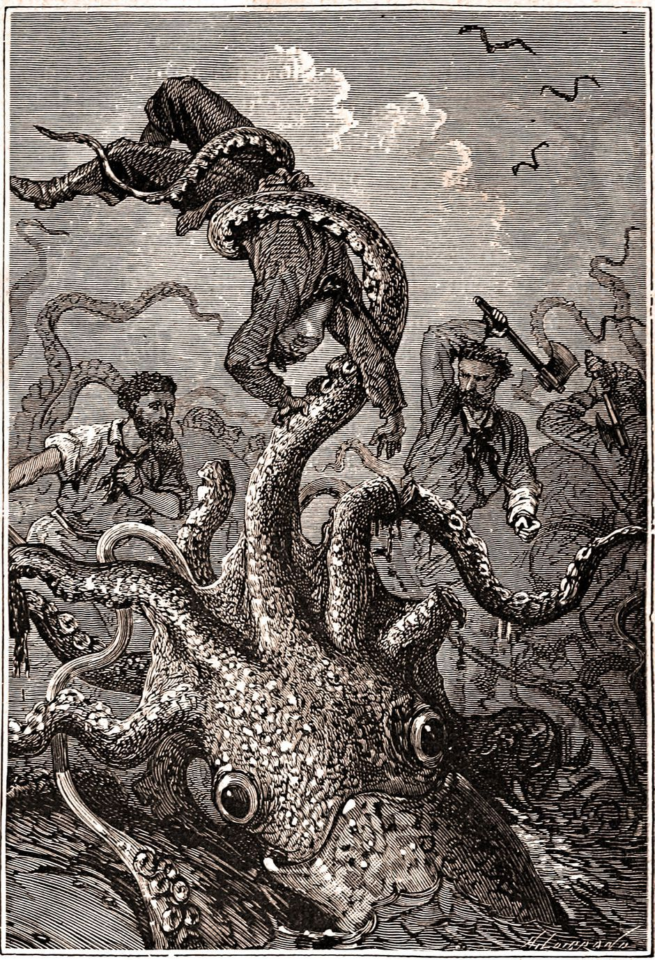 Legendary giant squid's genome revealed - CNET