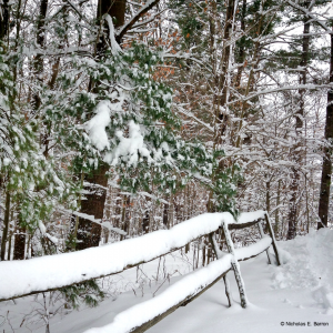 Photo of a snow-covered wooden fence and trees in New Marlborough, MA.
