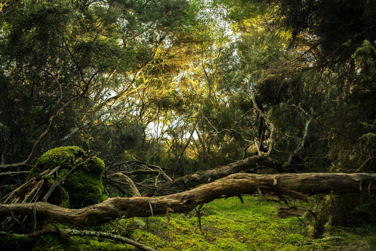 A photo of a dense jungle