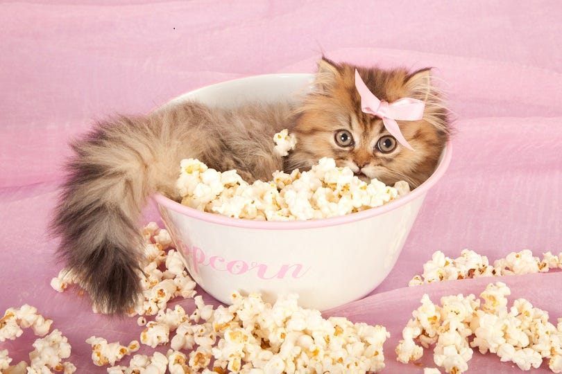 Can Cats Eat Popcorn? What You Need to Know! - Excited Cats