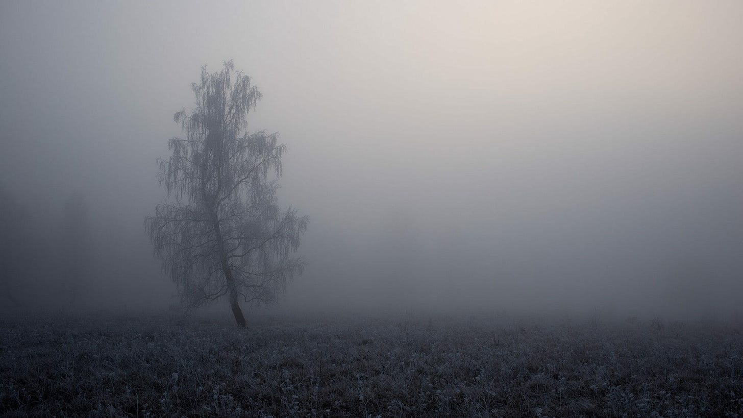 """image of a tree in the mist for poem by Larry G. Maguire titled """"The Hello Tree"""""""