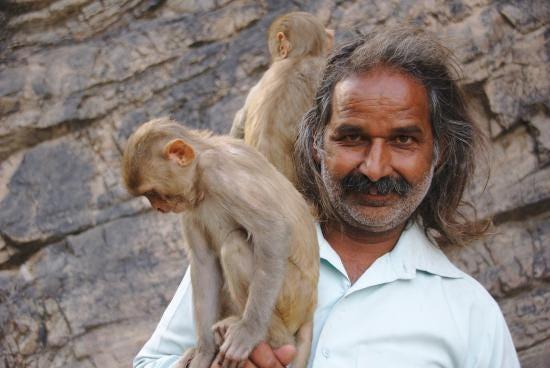 Monkey Man - Picture of Monkey Temple (Galta Ji), Jaipur ...