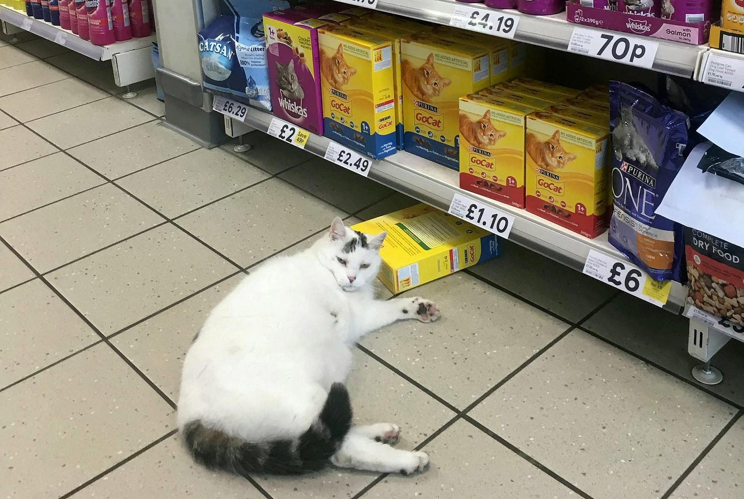 The cheeky cat knocked over a box of treats in Tesco