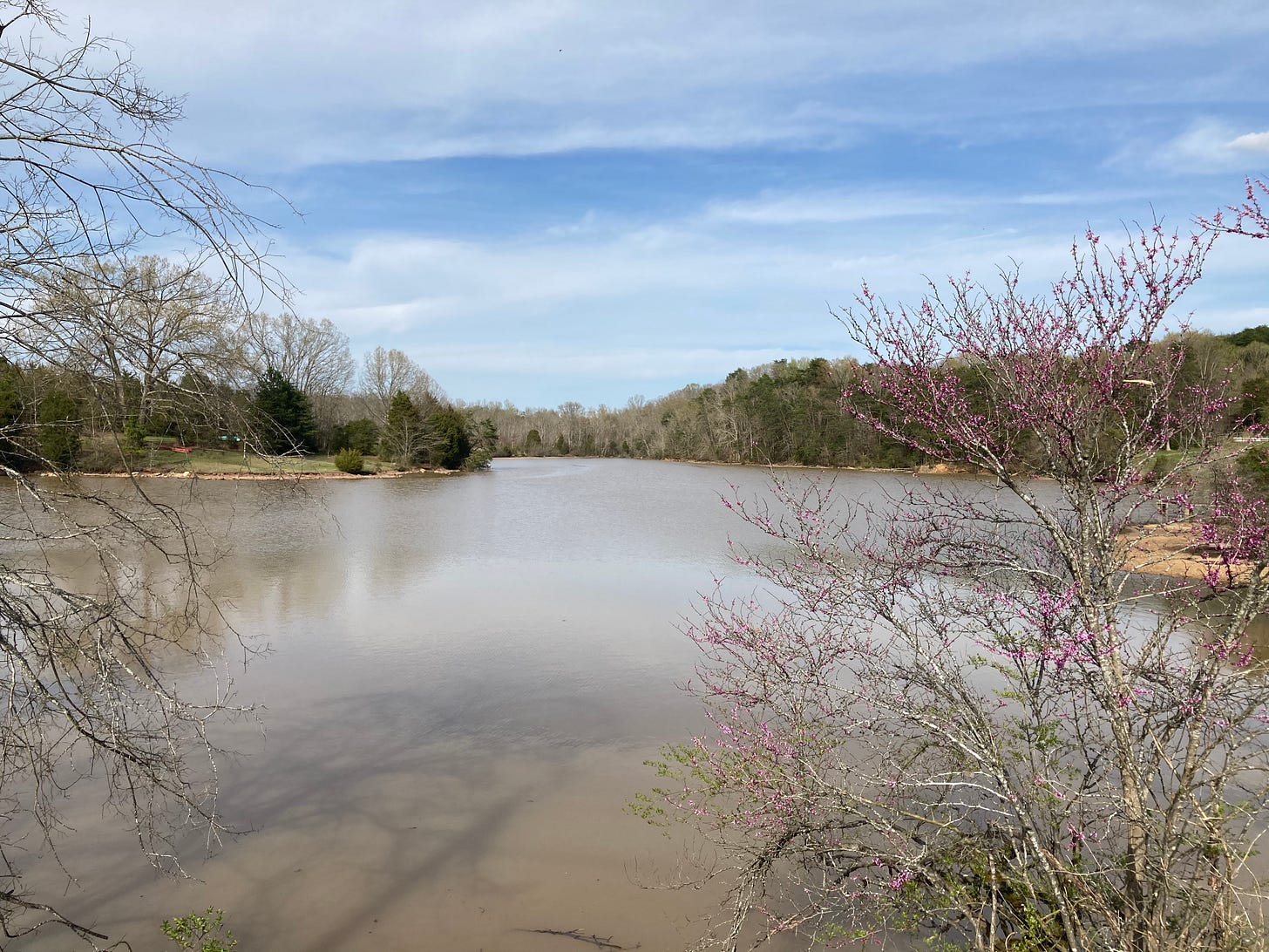 redbuds starting to bloom over a muddy river