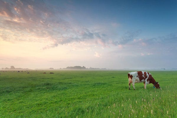 Image result for pasture