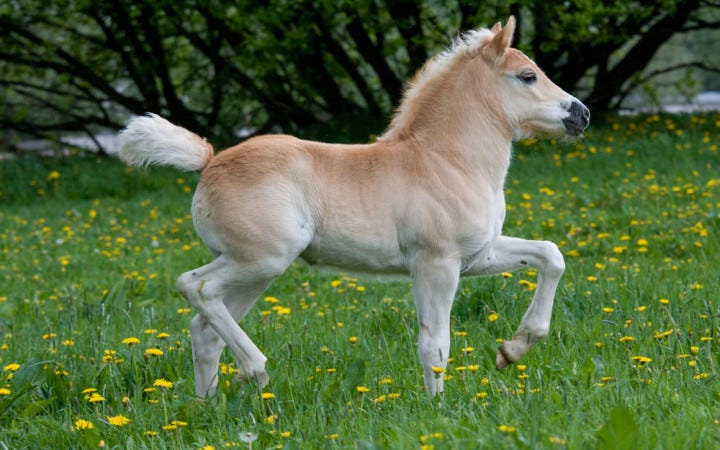 How Are Ponies and Horses Different? | Wonderopolis