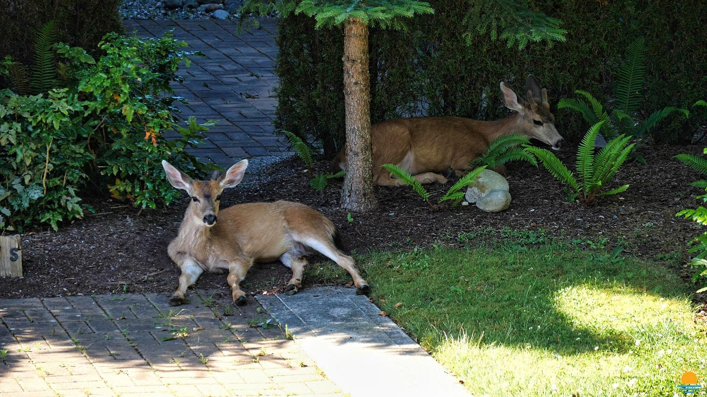 Too hot for even the deer.
