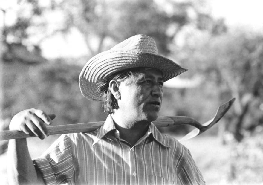 Activist Cesar Chavez's legacy unites two area organizations | St. Louis  Public Radio