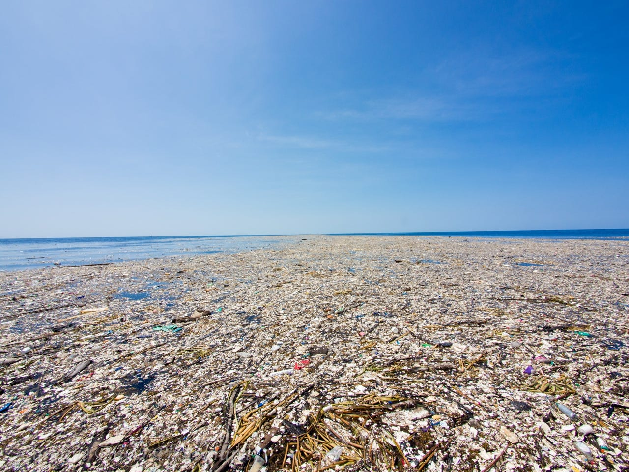 the great pacific garbage patch is a cluster of garbage in the ocean that  is the size of Russia : thalassophobia