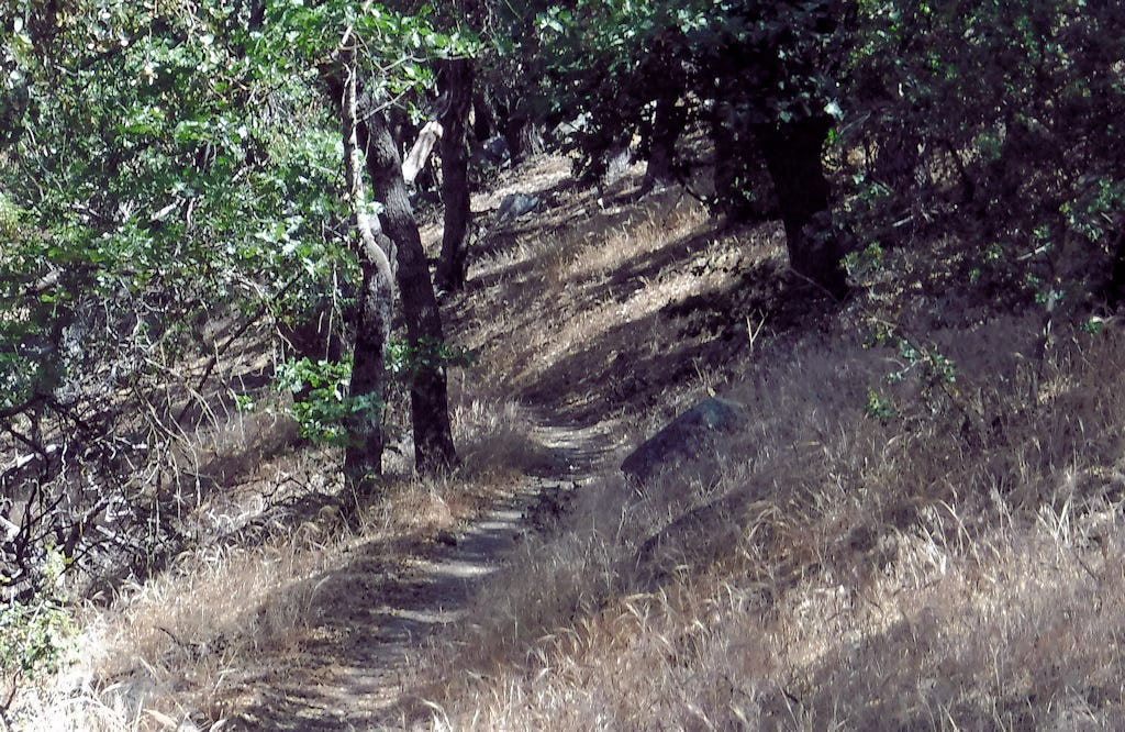 PCT winds through the shadows of oaks.