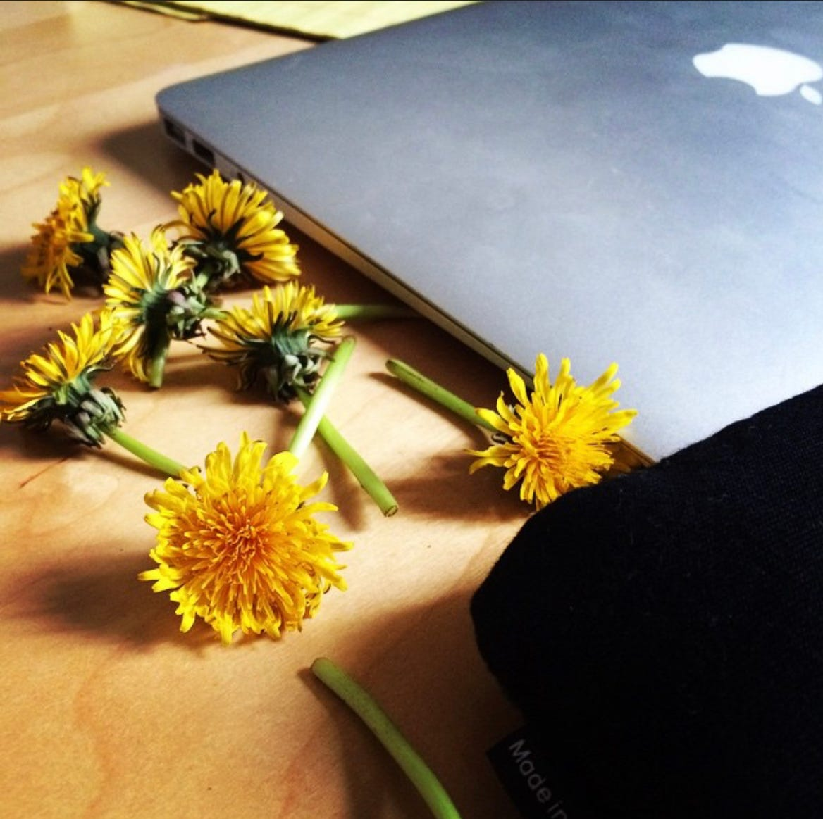 A close-up of dandelions on a desk next to a closed Apple laptop.