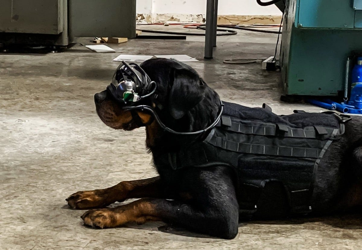 A new technology provides military working dogs with augmented reality goggles that allows a dog's handler to give it specific directional commands while keeping the warfighter remote and out of sight.