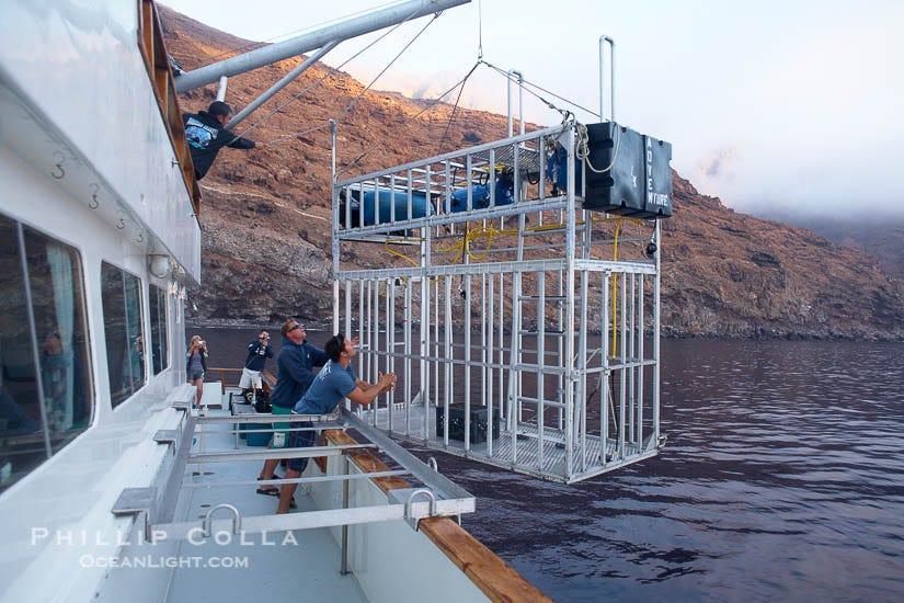 Great White Shark – Natural History Photography Blog