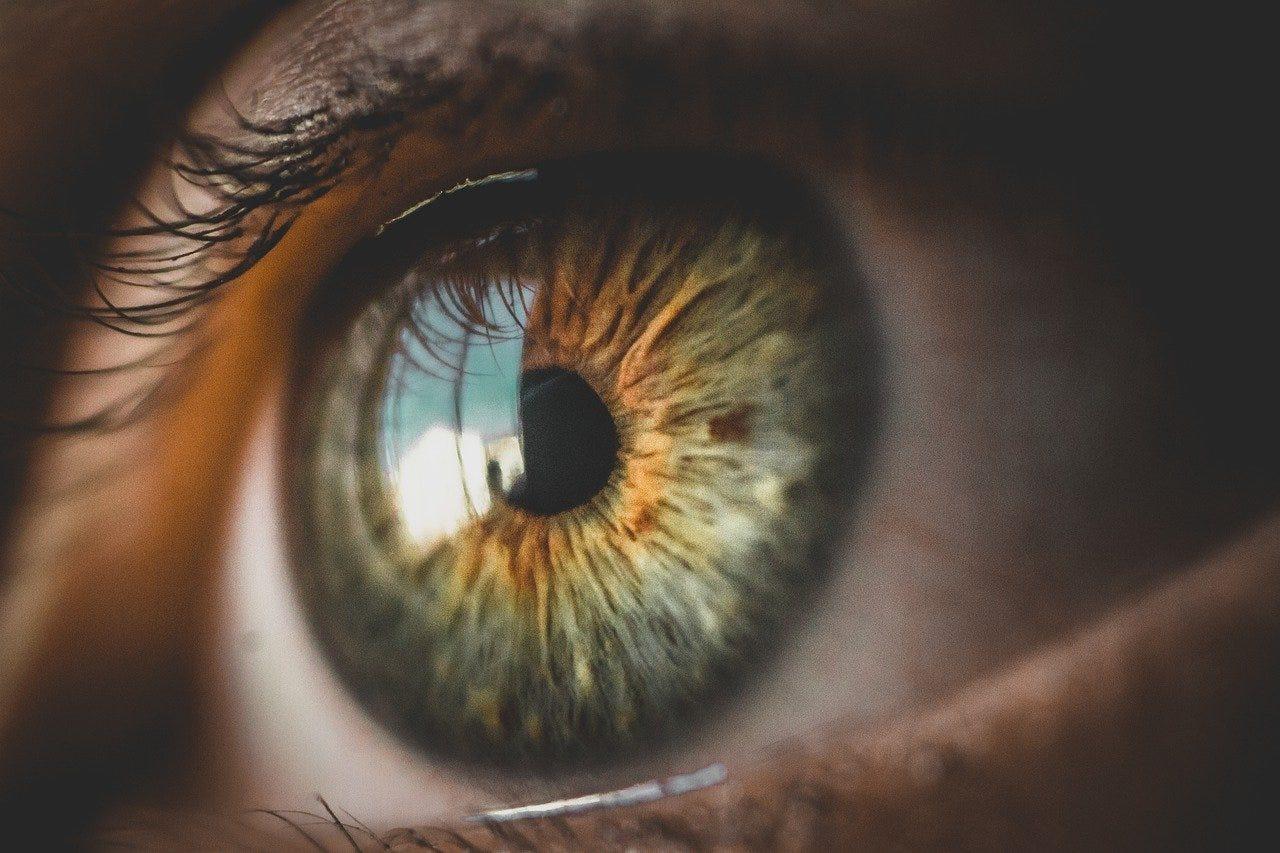 Eyes Look Face - Free photo on Pixabay