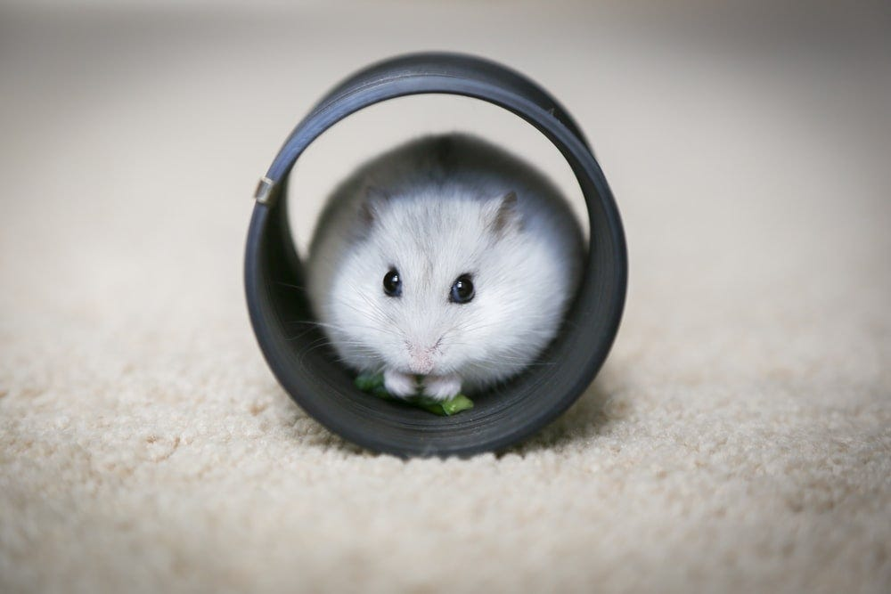 white and gray mouse on white textile