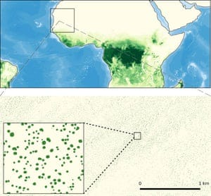 Seeing the forest and the trees: dryland trees grow in isolation without forming forests (greenish colors in upper figure), which makes them invisible for conventional satellite systems. A new study has used new sensors and artificial intelligence to map all individual trees within the rectangle over West Africa, showing that millions of trees grow in areas known as desert or grassland.