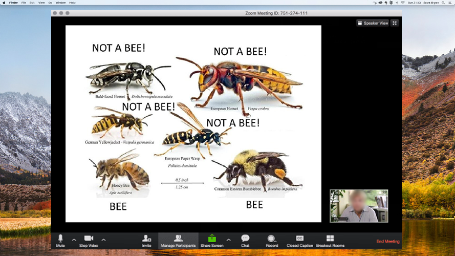 A beekeeping class on zoom