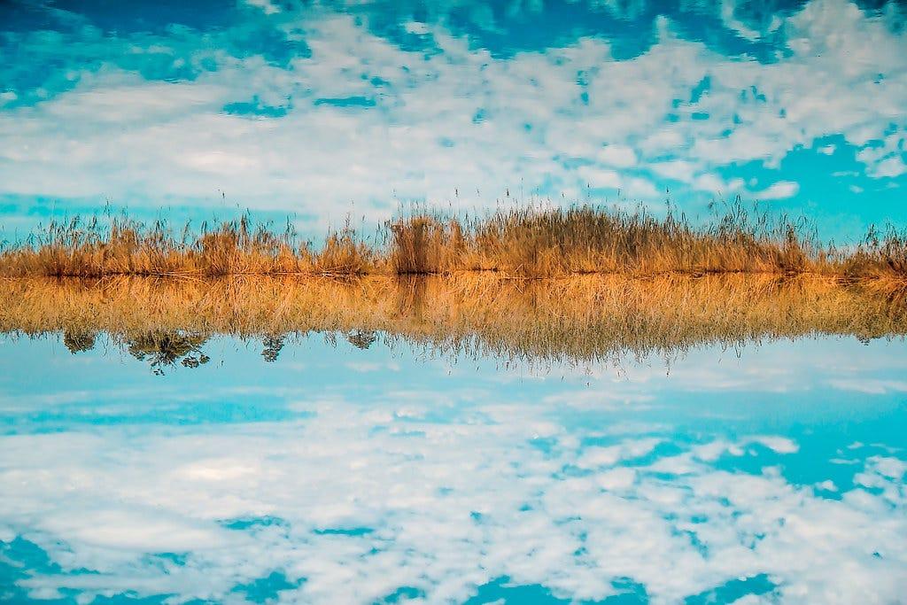 Upside down. | Let us meet — on the grassy strip between wat… | Flickr