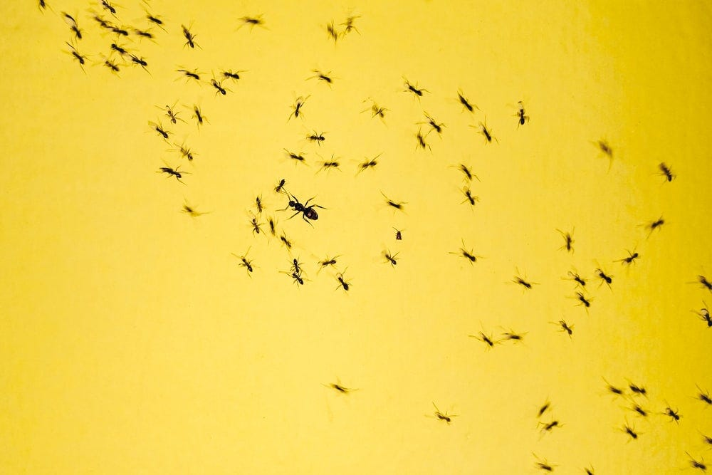 black insects on yellow background