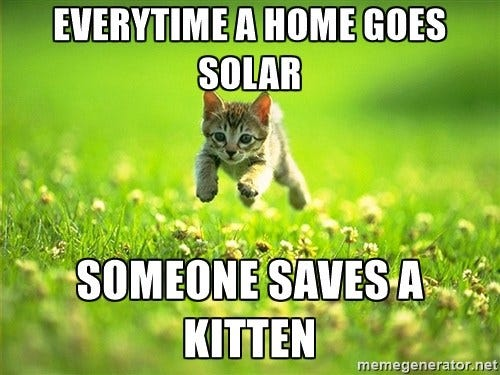 5 Fun Facts about Cats & Solar Power (with Kitten GIFs) - Main Street Solar
