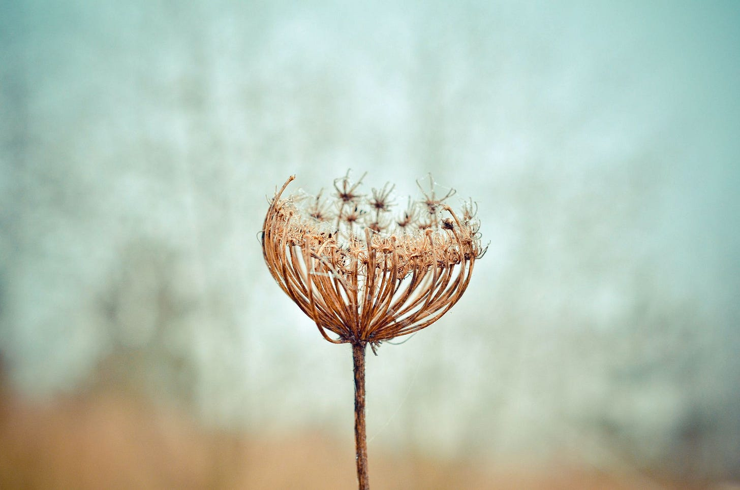 Year of the Weeds: A Compelling Read for Young Adults