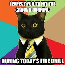 i expect you to hit the ground running during today's fire drill - Business  Cat - quickmeme