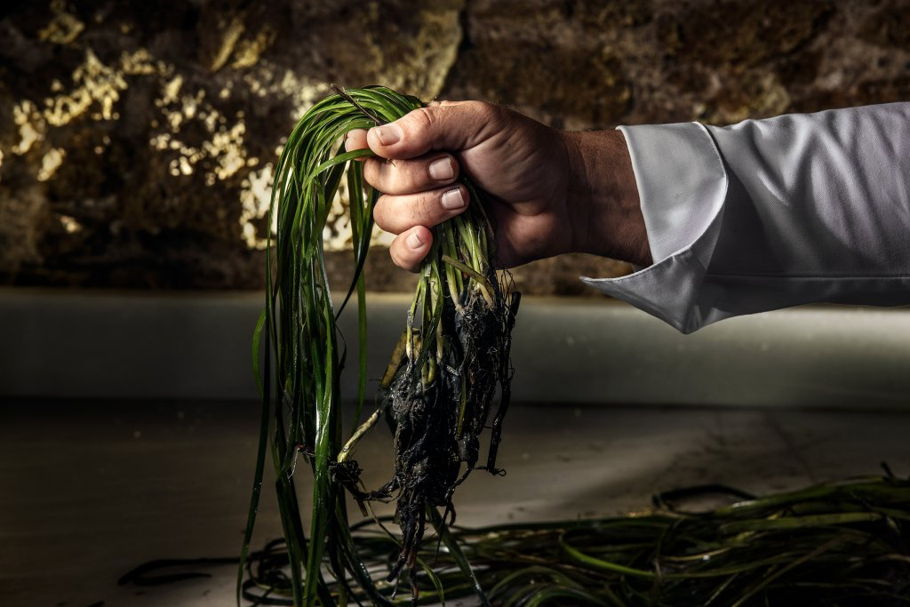 chef leon and his quest to harvest rice from the sea