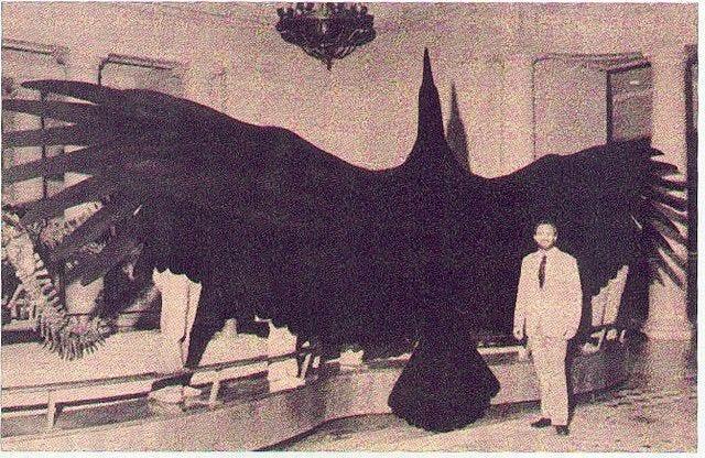 teratornis | Big animals, Animals, Cryptozoology