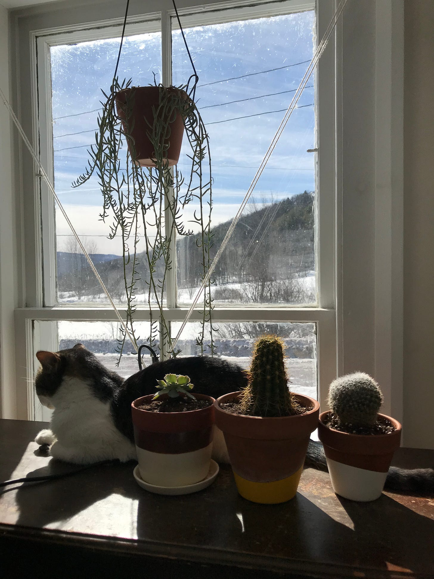 A cat and several succulents in the sun