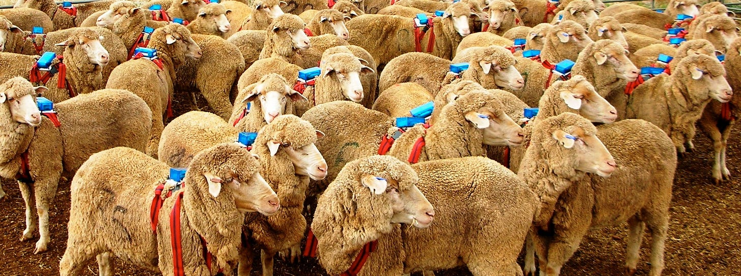 How Does The Sheep Herd Mentality Work? — Steemit