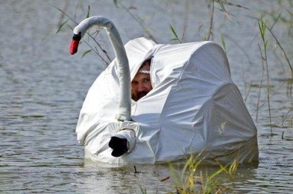 He swan very sneaky photographer: funny
