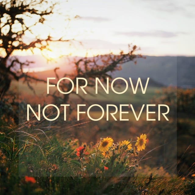 Flowers and trees at sunset with the words: For Now Not Forever superimposed on the image.