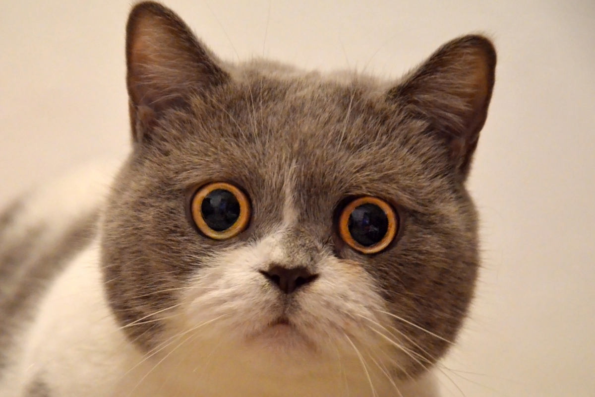 kitty with a shocked face
