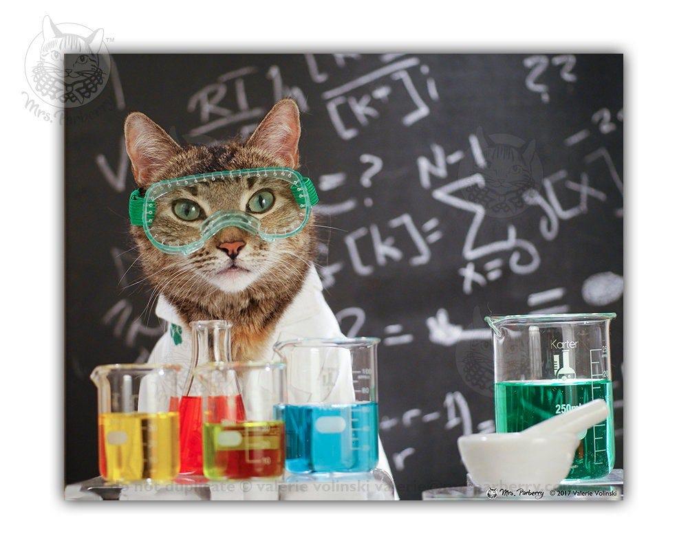 Cat Conquers Covid Cat Art Cat Science Print Cat In a | Etsy
