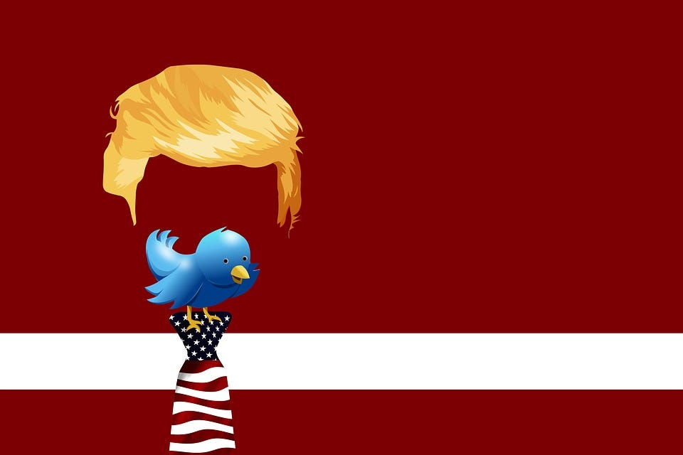 Trump, Twitter, Bird, Chirp, Tweet, Chirrup, Tweet