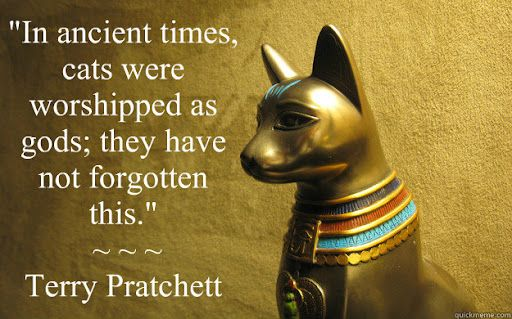 """In ancient times, cats were worshipped as gods; they have not forgotten  this."""" ~ ~ ~ Terry Pratchett - cats have big heads - quickmeme"""