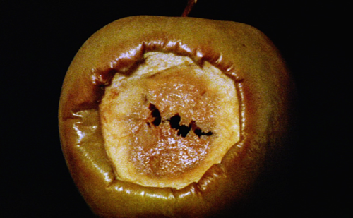 imagem da maçã mordida apodrecendo, escura