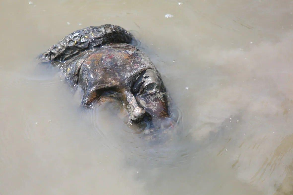 La tête coupée de la statue de la reine Victoria a été jetée dans les eaux boueuses de la rivière Assiniboine.