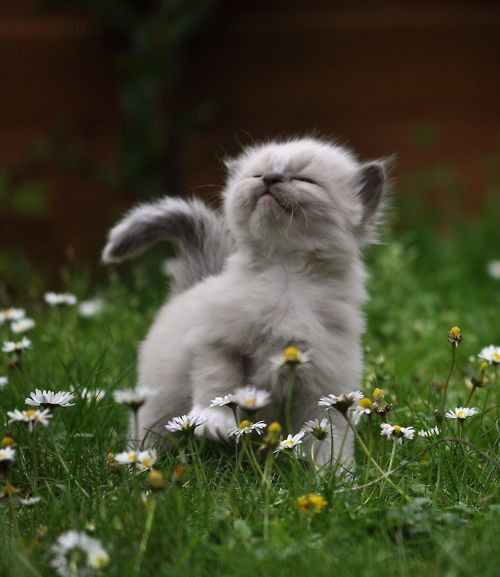 proud kitten   Cute animals, Funny animals, Cats