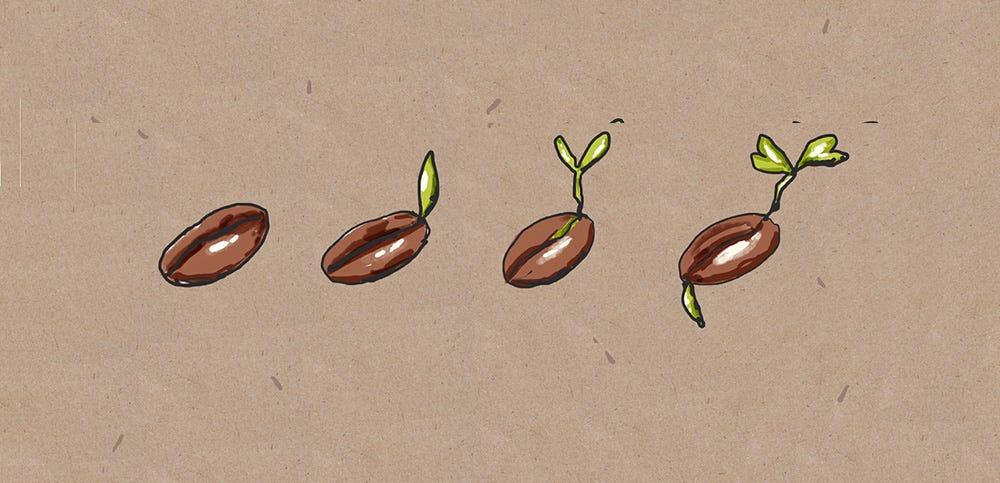 Illustration of seedlings