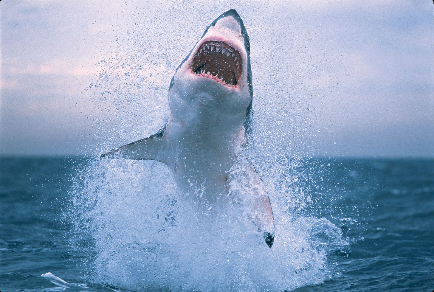 Because what great white sharks needed to be able to do was leap out of the  water to kill you. http://popcultu… | Shark photos, White sharks, Great  white shark