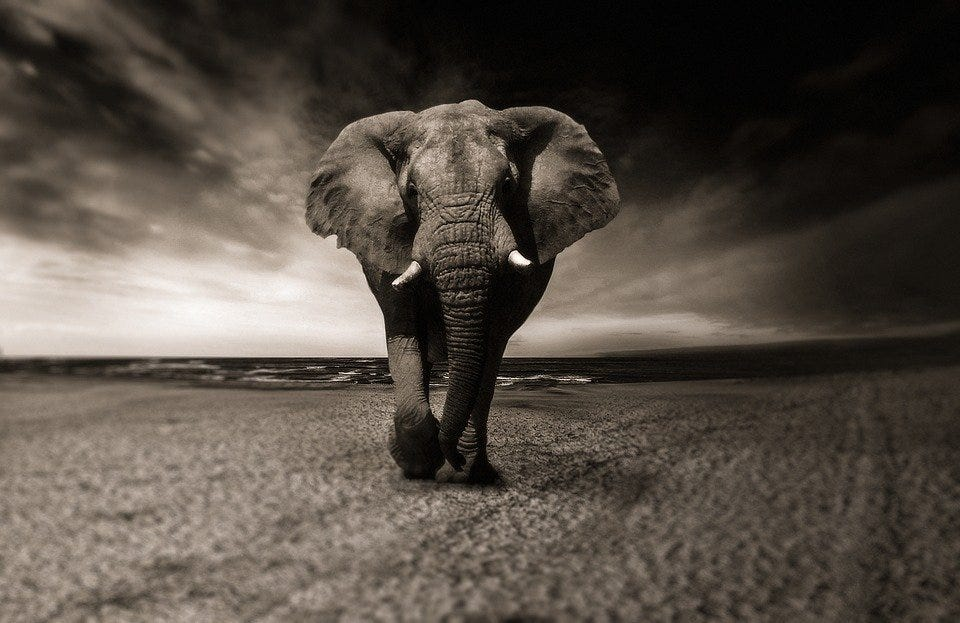 Elephant, Animal, Africa, Safari, Wild Animal, Creature