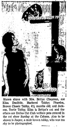 """A woman stands to the left of a cat three with a cat on each of its three rungs. She is looking up at the cat on the top level. The caption reads """"Shown above with [omitted] are Eliza Doolittle, Mackerel Tabby; Phaedra, Brown Classic Tabby, 4 1/2 months old; and Jackson, Tortie Tabby. Eliza is [omitted's] cat and the others are Dallas Cat Club welfare pets entered in the cat show Sunday at the Cabana. Also to be show is Jasper, a male brown tabby, who was too shy to be photographed."""