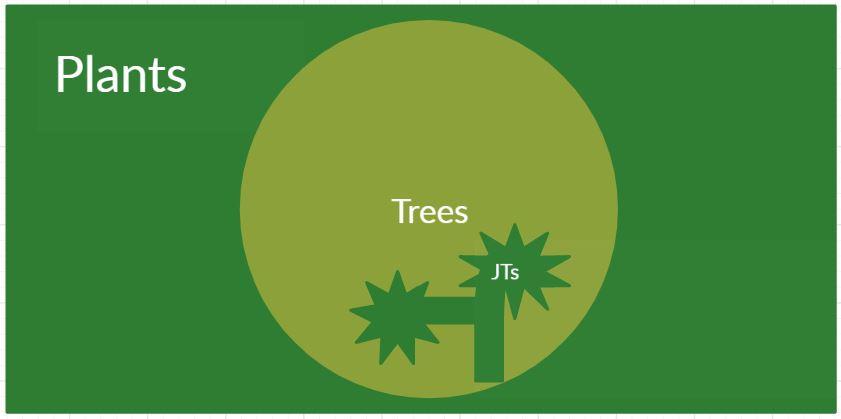 Letter From The Desert  Joshua Trees Are Trees