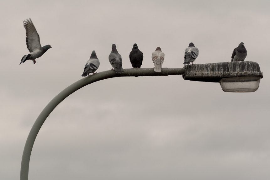 Pigeons on the street lamp