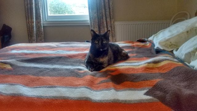 The cat on the bed at the B&B