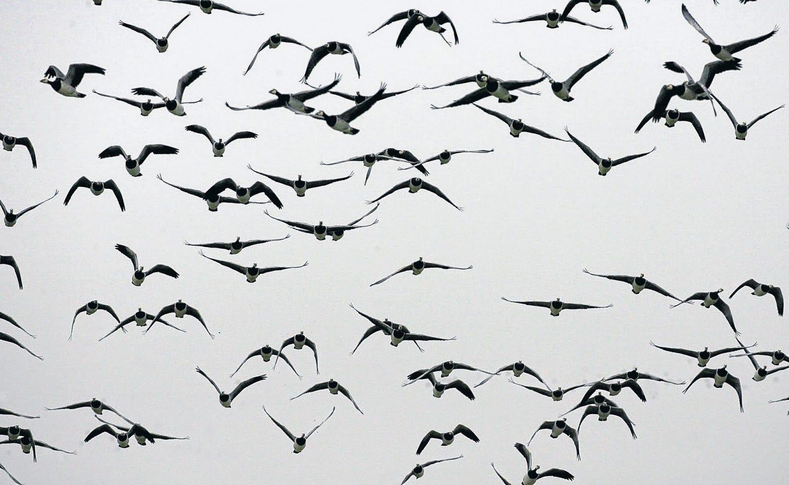 Campos de fresa: Ciento Volando (I): el refrán